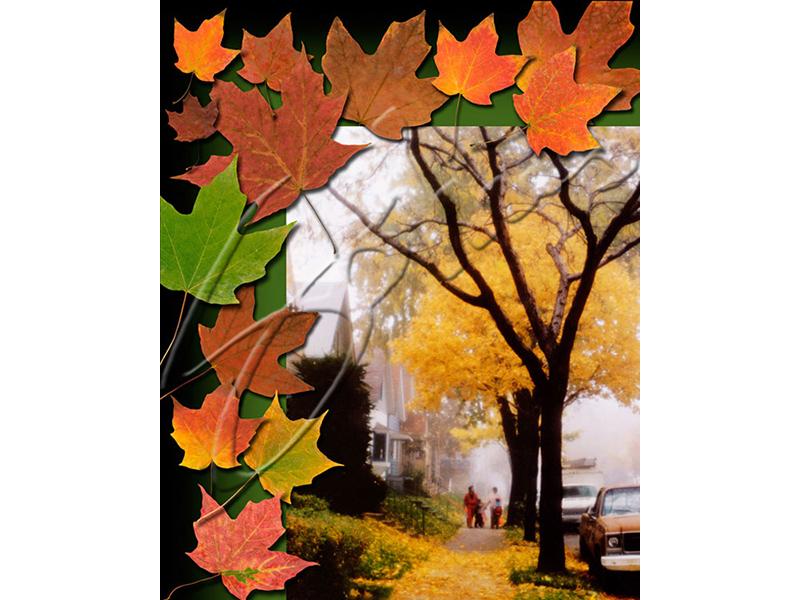 A Fine Autumn Day - 2002